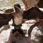 Croazia, il cormorano vanitoso delle cascate Krka