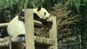 Ri Ri allo Zoo di Tokyo