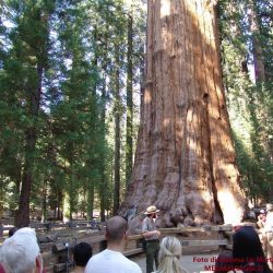 Usa: i giganti verdi del Sequoia e Kings Canyon National Parks