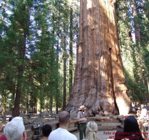 Usa: i giganti verdi del Sequoia e Kings Canyon National Parks