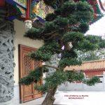 Hong Kong: non solo proteste. La splendida baia e il Monastero di Po Lin
