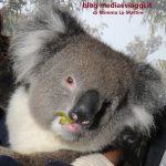 South Australia, Adelaide. Due tappe da non perdere: Il Cleland Wildlife Park e Kangaroo Island