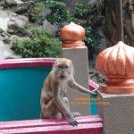 Kuala Lumpur e le dispettose scimmiette delle Batu Caves