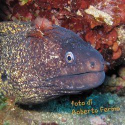 Appello di 54 diving center alla Regione Sicilia